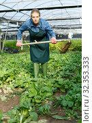 Woman farmer gardening in glasshouse. Стоковое фото, фотограф Яков Филимонов / Фотобанк Лори