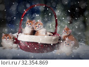 Five kittens of the breed British Shorthair sit in the Christmas basket and next. Snow falls. Magic, fabulous picture. Стоковое фото, фотограф Ирина Кожемякина / Фотобанк Лори
