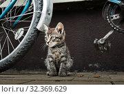 Купить «Маленький серый котенок рядом с велосипедом», фото № 32369629, снято 5 сентября 2019 г. (c) E. O. / Фотобанк Лори