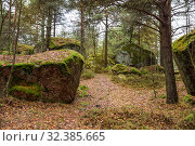 Купить «Path in the autumn forest between huge stones covered with green moss and lichens. Kuusinen Island, Kotka, Finland», фото № 32385665, снято 2 ноября 2019 г. (c) Юлия Бабкина / Фотобанк Лори