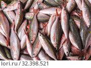 El Nido, Palawan Island, September 2018, fish catch. Стоковое фото, фотограф Степанов Илья / Фотобанк Лори