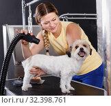 Купить «Portrait of caring woman grooming cute havanese dog at pet salon», фото № 32398761, снято 22 августа 2018 г. (c) Яков Филимонов / Фотобанк Лори