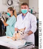 Купить «Dog on the operating table in a veterinary clinic», фото № 32407181, снято 13 сентября 2019 г. (c) Яков Филимонов / Фотобанк Лори
