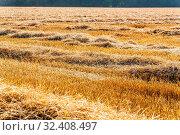 Ein Getreidefeld mit Weizen kurz vor der Ernte. Стоковое фото, фотограф Zoonar.com/Erwin Wodicka / age Fotostock / Фотобанк Лори
