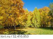 Купить «Осенний пейзаж в городском парке», фото № 32410853, снято 12 октября 2018 г. (c) Елена Коромыслова / Фотобанк Лори