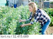 Купить «Young woman caring for plants in the garden», фото № 32415689, снято 28 февраля 2019 г. (c) Яков Филимонов / Фотобанк Лори