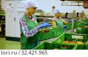Купить «Young women in uniform sorting peaches to crates at warehouse, checking quality of fruits», видеоролик № 32421965, снято 7 декабря 2019 г. (c) Яков Филимонов / Фотобанк Лори