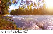 Купить «Meadow at mountain river bank. Landscape with green grass, pine trees and sun rays. Movement on motorised slider dolly.», видеоролик № 32426621, снято 23 февраля 2019 г. (c) Александр Маркин / Фотобанк Лори