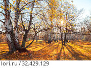 Купить «Beautiful bright sunny colorful autumn landscape. Morning among trees with foliage in nature outdoors in an orange-yellow golden forest in fine warm weather in October in the fall season. Russia, Saratov region», фото № 32429129, снято 19 октября 2019 г. (c) Светлана Евграфова / Фотобанк Лори