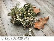 Купить «Исландский мох (Cetraria islandica) и осенние листья на столе», фото № 32429845, снято 18 ноября 2019 г. (c) Александр Романов / Фотобанк Лори