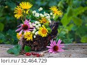 Купить «Colorful flowers and currant berries outdoor», фото № 32464729, снято 14 июля 2019 г. (c) Короленко Елена / Фотобанк Лори