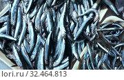Купить «Fresh anchovies for sale at market», видеоролик № 32464813, снято 5 августа 2020 г. (c) Яков Филимонов / Фотобанк Лори