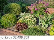 Купить «Миксбордер из многолетних растений в саду», фото № 32499769, снято 18 августа 2018 г. (c) Елена Коромыслова / Фотобанк Лори
