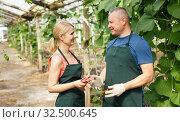 Купить «Farmers standing in greenhouse», фото № 32500645, снято 5 июля 2018 г. (c) Яков Филимонов / Фотобанк Лори