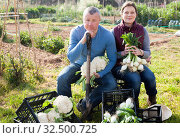 Купить «Male and female gardeners holding harvest of vegetables in garden», фото № 32500725, снято 21 февраля 2019 г. (c) Яков Филимонов / Фотобанк Лори