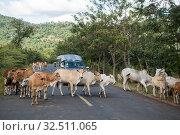 Купить «Cows on a road near the town of Sra Em in the province of Preah Vihear in Northwest Cambodia. Cambodia, Sra Em, November, 2017,», фото № 32511065, снято 17 февраля 2020 г. (c) age Fotostock / Фотобанк Лори