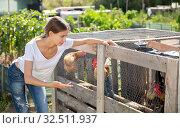 Купить «Farmer woman feeding chikens in a hen house», фото № 32511937, снято 23 января 2020 г. (c) Яков Филимонов / Фотобанк Лори
