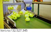 View of ripe apples on conveyor belt of sorting production line. Стоковое видео, видеограф Яков Филимонов / Фотобанк Лори