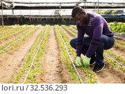 Купить «African farmer caring for young houseplants», фото № 32536293, снято 29 октября 2019 г. (c) Яков Филимонов / Фотобанк Лори