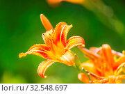 Купить «Close-up shot of the beautiful flowers. Suitable for floral background.», фото № 32548697, снято 21 января 2020 г. (c) easy Fotostock / Фотобанк Лори