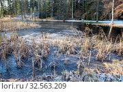 Купить «Ice on forest lake with frozen dry grass at morning, cold autumn», фото № 32563209, снято 30 октября 2019 г. (c) Кекяляйнен Андрей / Фотобанк Лори