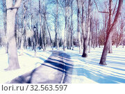 Купить «Winter landscape, snowy winter trees and alley in the park. Winter snowy morning scene. Colorful winter», фото № 32563597, снято 6 марта 2019 г. (c) Зезелина Марина / Фотобанк Лори