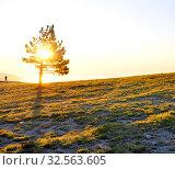 Купить «Одинокая сосна на восходе солнца. Крым. Ай-Петри», фото № 32563605, снято 9 августа 2019 г. (c) Владимир Кошарев / Фотобанк Лори