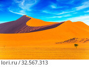 Orange, violet and yellow dunes of the Namib Desert. Small lonely tree in the huge desert. Concept of extreme and exotic tourism. Namibia, South Africa. Стоковое фото, фотограф Zoonar.com/kavram / easy Fotostock / Фотобанк Лори