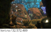 Aquarium with bubbles and fishes. Стоковое видео, видеограф Илья Шаматура / Фотобанк Лори