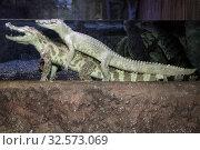Купить «Крокодилы в воде в террариуме», фото № 32573069, снято 19 марта 2019 г. (c) Татьяна Белова / Фотобанк Лори