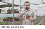 Купить «Professional gardener working with tomato seedlings in greenhouse», видеоролик № 32581889, снято 26 апреля 2019 г. (c) Яков Филимонов / Фотобанк Лори