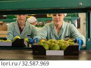 Купить «positive women employees in uniform sorting fresh apples on producing grading line», фото № 32587969, снято 21 февраля 2020 г. (c) Яков Филимонов / Фотобанк Лори