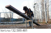 Купить «A german shepherd dog walking through the double swing», видеоролик № 32589481, снято 13 июля 2020 г. (c) Константин Шишкин / Фотобанк Лори