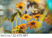 Купить «Close-up shot of the beautiful flowers. Suitable for floral background.», фото № 32615481, снято 21 января 2020 г. (c) easy Fotostock / Фотобанк Лори