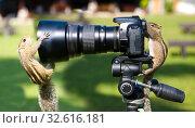 Palm squirrels staged a photo shoot. Стоковое фото, фотограф Александр Клёнов / Фотобанк Лори
