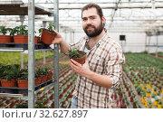 Купить «Male horticulturist puts the pots of tomatoes seedlingon the shelves», фото № 32627897, снято 9 апреля 2019 г. (c) Яков Филимонов / Фотобанк Лори