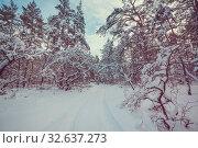 Купить «Scenic snow-covered forest in winter season. Good for Christmas background.», фото № 32637273, снято 23 января 2020 г. (c) easy Fotostock / Фотобанк Лори