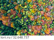 Impressive colorful autumn landscape of trees (2019 год). Стоковое фото, фотограф Яков Филимонов / Фотобанк Лори