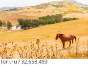 Купить «A brown horse in a meadow above a body of water and crops in the mountains of Sicily», фото № 32658493, снято 16 февраля 2020 г. (c) easy Fotostock / Фотобанк Лори