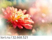 Купить «Close-up shot of the beautiful flowers. Suitable for floral background.», фото № 32668521, снято 21 января 2020 г. (c) easy Fotostock / Фотобанк Лори