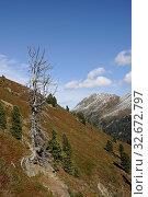 Gipfel, berg, berge, königsleiten, salzachtal, salzach,gebirgstal, gebirge, bergwald, kitzbüheler alpen, österreich, natur, landschaft, oberpinzgau, pinzgau, salzburger land, baum, bäume. Стоковое фото, фотограф Zoonar.com/Volker Rauch / easy Fotostock / Фотобанк Лори