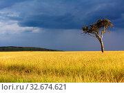 Landscape of the masai mara national park. Стоковое фото, фотограф Zoonar.com/matthieu gallet / easy Fotostock / Фотобанк Лори
