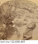 Купить «The Johnstown Calamity. Somebody's Darling - Unclaimed - Unknown., George Barker (American, 1844 - 1894), 1889, Albumen silver print», фото № 32690401, снято 17 июня 2019 г. (c) age Fotostock / Фотобанк Лори