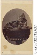 Cat seated on a stool, printed in quasi-oval style, Henry Pointer (British, 1822 - 1889), 1870–1872, Albumen silver print (2019 год). Редакционное фото, фотограф ARTOKOLORO QUINT LOX LIMITED / age Fotostock / Фотобанк Лори