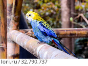 Photo Picture of a Beautiful Colored Tropical Parrot. Стоковое фото, фотограф Zoonar.com/ALB / easy Fotostock / Фотобанк Лори