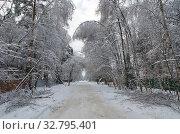 Купить «Зимний пейзаж с дорогой и заснеженными деревьями после сильного ветра и снегопада», фото № 32795401, снято 15 ноября 2016 г. (c) Елена Коромыслова / Фотобанк Лори
