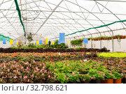 Купить «Interior greenhouse with indoor flowers», фото № 32798621, снято 20 декабря 2019 г. (c) Евгений Харитонов / Фотобанк Лори
