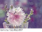 Купить «Close-up shot of the beautiful flowers. Suitable for floral background.», фото № 32802897, снято 21 января 2020 г. (c) easy Fotostock / Фотобанк Лори