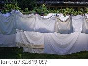 White bed linen left for drying in garden. Стоковое фото, фотограф Konrad Zelazowski / easy Fotostock / Фотобанк Лори