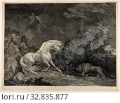 A Horse Affrighted by a Lion, September 25, 1777, George Stubbs, English, 1724-1806, England, Etching and engraving on cream laid paper, 341 × 459 mm (image), 365 × 477 mm (sheet) Редакционное фото, фотограф ARTOKOLORO QUINT LOX LIMITED / age Fotostock / Фотобанк Лори